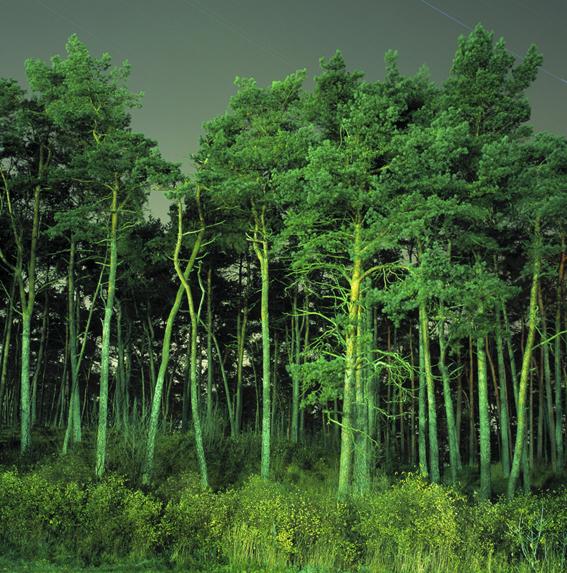 Nida - Trees (big)